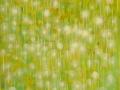 12 Blütenmeer 6.5.2015 foto arne bicker