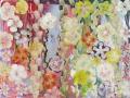 14 Blütenmeer 6.5.2015 foto arne bicker