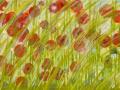 16 Blütenmeer 6.5.2015 foto arne bicker
