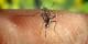 Cette petite peste au nom vaillant de moustique-tigre transmet une trentaine de virus. Chez nous. Foto: James Gathany / CDC / Wikimedia Commons
