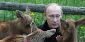 Il est tellement chou... impossible qu'il ait de mauvaises intentions... Foto: Premier.gov.ru / Wikimedia Commons / CC-BY-SA