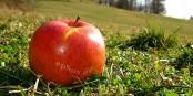 Grâce à Vladimir Poutine, les Européens mangeront plus de pommes. Vive l'alimentation saine ! Foto: EpSos.de / Wikimedia Commons / CC-BY-SA 3.0