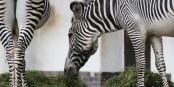Einen Nachmittag lang Tiere im Zoo anschauen, das lässt einen die Weltpolitik vergessen. Foto: Kai Littmann