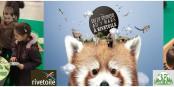 """Nach den Bären stehen  dieses Jahr die Insekten beim """"pädagogischen Marketing"""" im Mittelpunkt. Foto: Parc Animalier de Sainte-Croix"""
