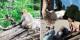 Berberaffen und Greifvögel erwarten die Besucher im elsässischen Kintzheim. Foto: Volerie des Aigles