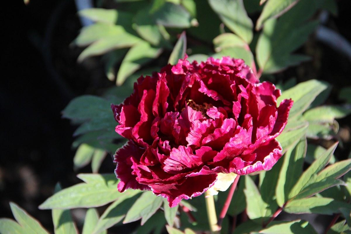 OK flower 2