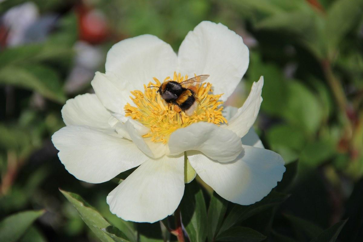 OK flower 3