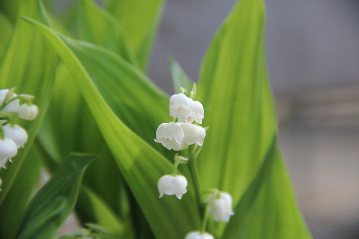 OK flower 5