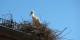 Munster mit seinen Storchennestern sollte bei einem Ausflug ins Oberelsass auf jeden Fall auf dem Programm stehen. Foto: Eurojournalist(e)