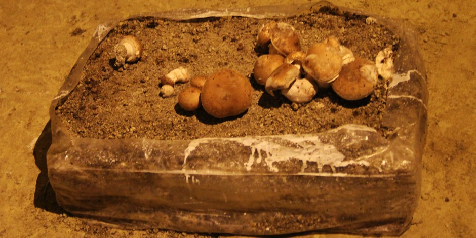 So wachsen die besten Champignons  - in Höhlen, bei 21 Grad. Foto: Eurojounalist(e)