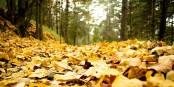 C'est la saison : les feuilles tombent, tout comme les feuilles d'impôts... Foto: Hermes from Mars / Wikimedia Commons / CC-BY-SA 3.0