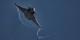 """Sechs französische Flugzeuge des Typs """"Rafale"""" haben ein Ausbildungslager des IS in Syrien bombardiert. Foto: KGyST / Wikimedia Commons / CC-BY-SA 3.0"""