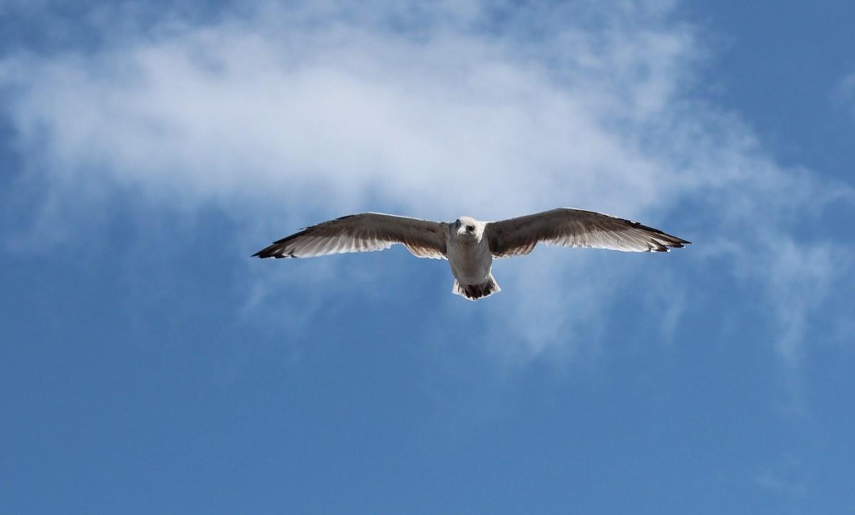 Über den Wolken muss die Freiheit wohl grenzenlos sein... Foto: Eurojournalist(e)
