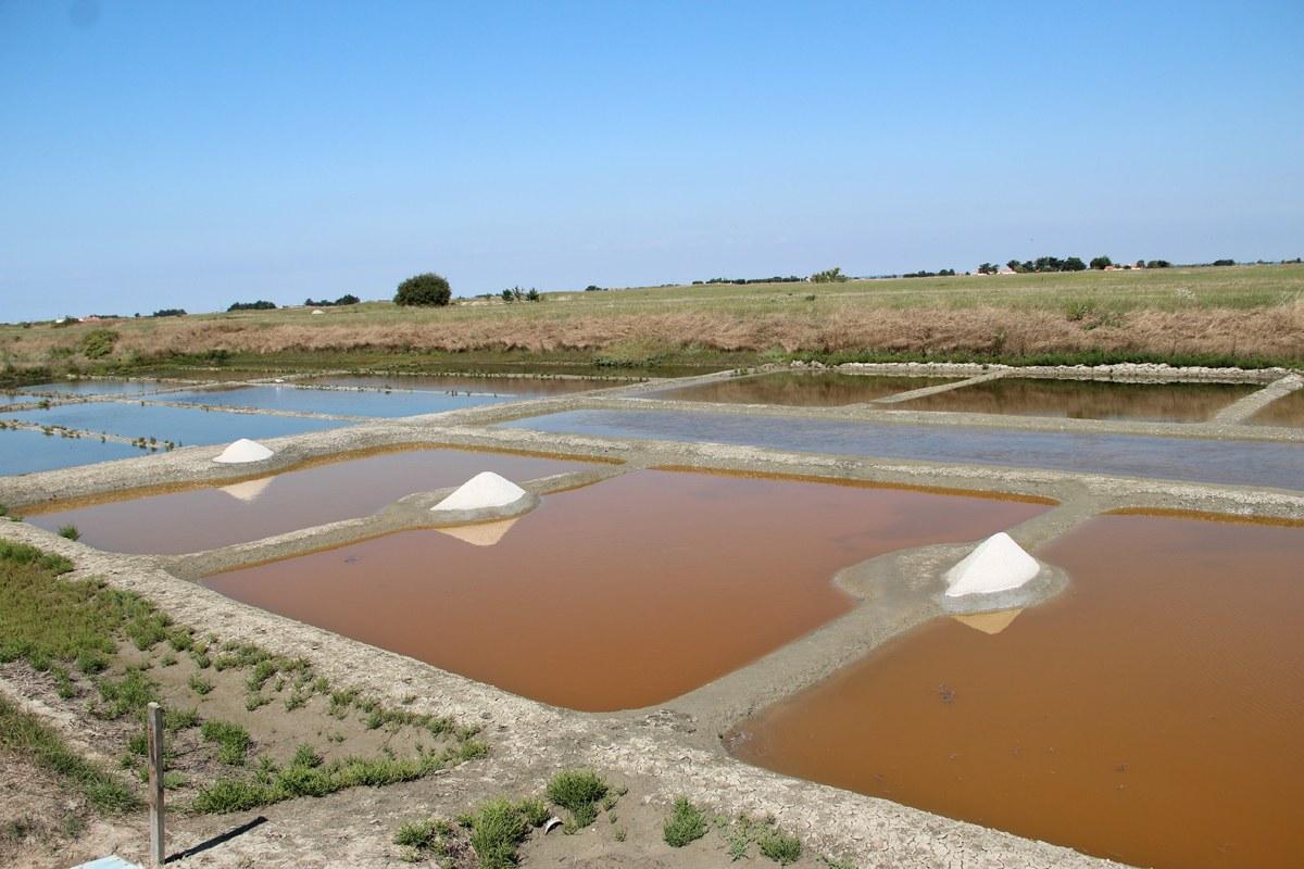 Eine mühsame Handarbeit ist die Salzgewinnung - aber das Ergebnis lohnt den Aufwand. Foto: Eurojournalist(e)