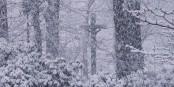 L'hiver dans la région du Rhin Supérieur peut parfois prendre des dimensions féeriques... Foto: Zumthie / Wikimedia Commons / PD