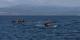 So lange keine politische Lösung gefunden wird, werden weiterhin Menschen in Nussschalen die Überfahrt über das Mittelmeer wagen. Foto: Ggia / Wikimedia Commons / CC-BY-SA 4.0int