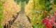 """Was wird hier angebaut? """"Neuaustrasischer Wein""""? """"Rhein-Champagner-Wein?"""" Oder gar """"Alcalischer Wein""""? Klingt irgendwie nach Batteriesäure und blöd... Foto: Lamoi / Wikimedia Commons / CC-BY-SA 4.0int"""