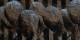 Gesichtslose Opfer im Viehwagen auf dem Weg in die Vernichtung, Ausschnitt aus einem Werk von Lola Granell. Foto: Centre Européen du Résistant Déporté