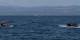 In Schlauchbooten machen sich Flüchtlinge auf den extrem gefährlichen Weg nach Europa. Viele sterben auf dieser Flucht. Foto: Ggia / Wikimedia Commons / CC-BY-SA 4.0int