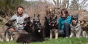 Des gens sympas, des chiens magnifiques... Foto: Phil Bergdolt