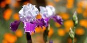 C'est le printemps - mais pas (encore) pour l'économie alsacienne. Foto: cogdogblog / Wikimedia Commons / CC0 1.0