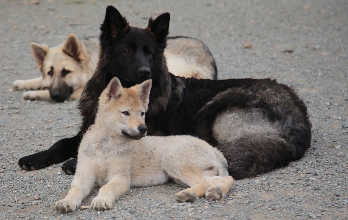dogs sel 4 OK