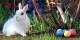 Joyeuses Pâques ! Foto: Lesekreis / Wikimedia Commons / CC0 1.0