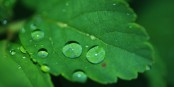Ah, la force de guérison  des plantes... Foto: Glady / Pixabay / CC0 PD
