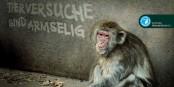 """Das """"Dieselgate"""" von VW wird jetzt noch um das Kapitel """"Tierversuche"""" erweitert. Und das Kapitel """"Menschenversuche"""" kommt auch gerade hoch. Foto: Deutscher Tierschutzbund e.V. / Wikimedia Commons / CC-BY-SA 3.0"""