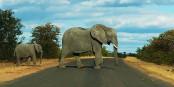 Est-ce que les éléphants nous enseigneront comment combattre le cancer ? Foto: Marcmiquel / Wikimedia Commons / CC-BY-SA 4.0int