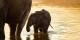 Il elefantino, le petit éléphant... Foto: Dominik Angstwurm / Wikimedia Commons / CC-BY-SA 3.0
