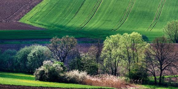 Europe - beautiful spring! Foto: (c) Frantisek Zvardon / EJ 2019