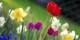 Schöne Ostern allen Leserinnen und Lesern (und den anderen auch...)! Foto: Anita Martinz from Klagenfurt, Austria / Wikimedia Commons / CC-BY 2.0