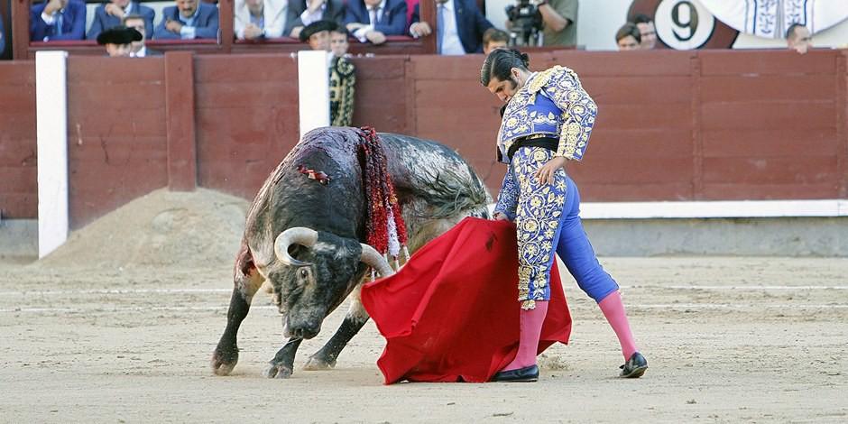 Le Parti Animaliste souhaite interdire la maltraitance d'animaux, comme dans le cadre de la tauromachie. Foto: Manuel Duran Blaquez / Wikimedia Commons / CC-BY-SA 4.0int