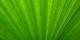 Le Vert domine toutes les autres couleurs actuellement... Foto: Gausanchennai / Wikimedia Commons / CC-BY-SA 4.0int