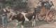 """Des paroissiens de St-Caradeg-Tregomel se rendant à l'Assemblée """"Nationale"""" parisienne  Foto: éditeur A.Waron/Wikimédia Commons/CC-BY-SA PD"""