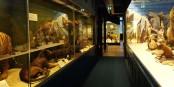 Drei Jahre wird das Zoologische Museum in Strassburg geschlossen bleiben und sich komplett neu erfinden. Foto: Edelseider / Wikimedia Commons / CC-BY-SA 3.0