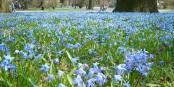 A Lodz : bientôt de vrais printemps ?  Foto: Ixtlilto/Wikimédia Commons/CC-BY-SA/ PD