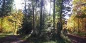 Quelque part en Allemagne, la forêt, cinégénique et romanesque  Foto: marc chaudeur/Eurojournalist/CC-BY-SA