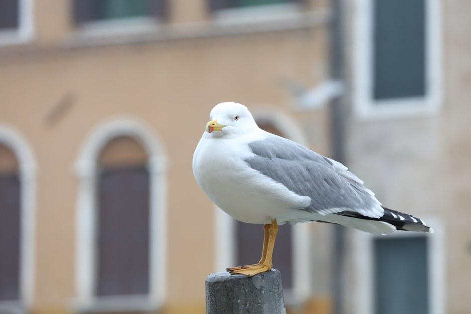 OK 4 Venedig 4