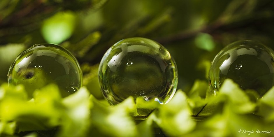 Green Deal - et la Terre deviendra plus écologique... Foto: Sergio Boscaino from Busseto, Italy / Wikimedia Commons / CC-BY 2.0