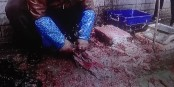 Gestern in Wuhan - die Hygiene bei diesem Fischhändler zeigt, wie schwer es wird, die Ausbreitung des Corona-Virus an der Quelle zu stoppen. Foto: ScS EJ