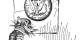 Ist die Demokratie wirklich nur noch ein zahnloser Tiger, der vor König Mammon kuscht? Foto: Homer Davenport (1867 - 1912) / Wikimedia Commons / PD