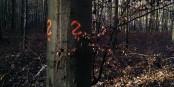 Dans la forêt, de grands points d'interrogation - pourquoi n'avons-nous pas le droit d'y aller ? Foto: (c) Michael Magercord