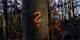 Wenn es irgendwo gerade ungefährlich ist, dann im Wald. Und genau dort darf jetzt niemand mehr hin... Foto: (c) Michael Magercord