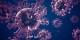 Oder ist das Virus am Ende lila? Fragen über Fragen... Foto: HFCM Communicatie / Wikimedia Commons / CC-BY-SA 4.0int
