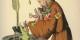 Le Grand Nicolas trempe les petits Blancs dans son encrier parce qu'ils se moquent d'un petit garçon noir (Struwwelpeter,1858)  Foto: Hoffmann/Wikimédia Commons/CC-BY-SA/PD