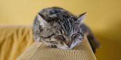 Die Katze kann 18 Stunden am Stück schlafen, wenn ihr danach ist. Das können wir Menschen leider nicht. Foto: Sabri Tuzcu / Wikimedia Commons / CC0 1.0