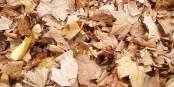 """""""Les feuilles mortes se ramassent à la pelle"""" - hoffentlich gilt das nicht bald auch für uns... Foto: Eurojournalist(e)"""