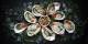 "Gewalt wegen Austern? Foto: Delicacy Food ""free-photos"" / Wikimedia Commons / CC0 1.0"